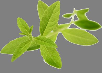 leaf-390